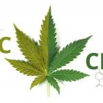 thc-cbd-cannabis-medica-terapeutica