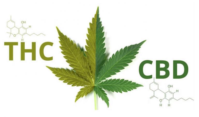 Introduzione alla cannabis terpeutica